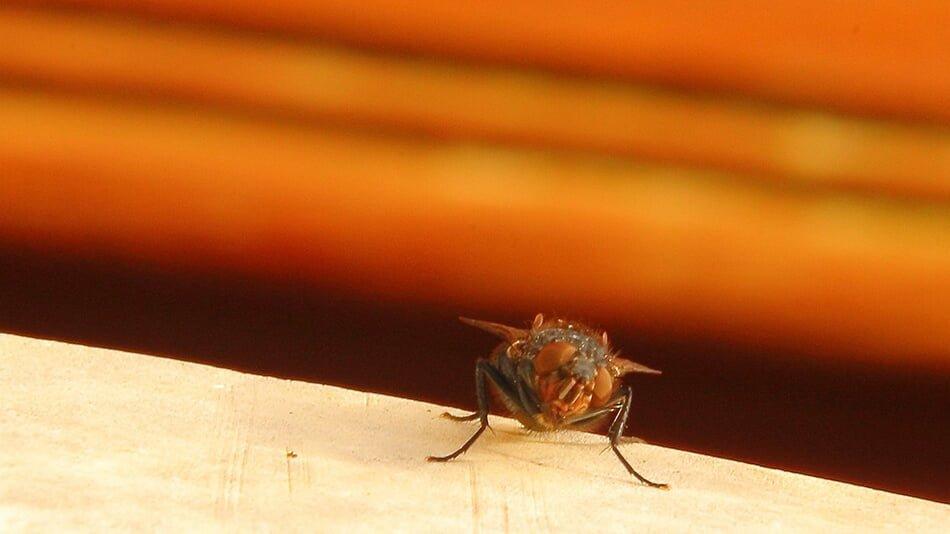 Đó là một chú ruồi nhỏ